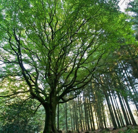 paimpont-forest-broceliande-41