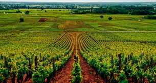 vinhedos-borgonha