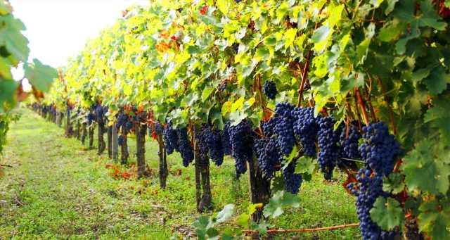 vinicolas-bordeaux-franca