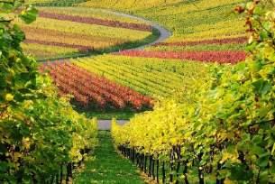 vinicolas-franC3A7a